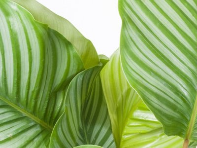 Trendy stueplanter til grønne oaser