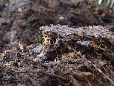 Kompost giver god høst