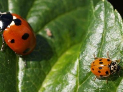 Pas på nyttedyrene i haven